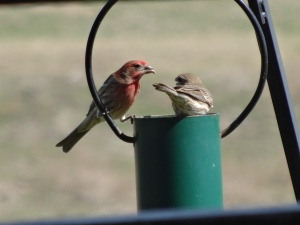 Our feathered friends enjoy feasting