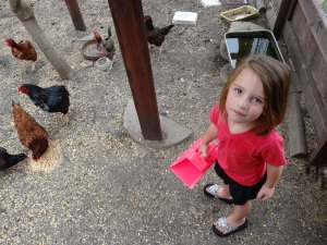 Kylee enjoyed feeding our Turkeys, Chickens & Guineas
