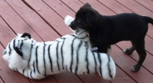 R.J. gives his typically warm greeting to a stuffed tiger.