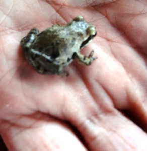 Can you believe this tiny beauty. He was gently placed back where he was found.