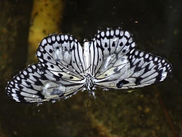 Butterflies in the Garden 053