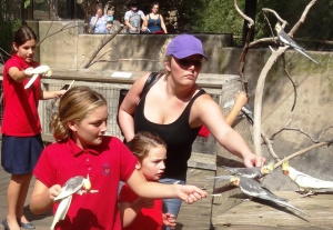 Rylee, Kylee and Kayla loved the birds.