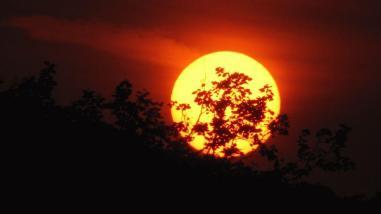 Sunset witj tree