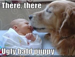 bald puppy