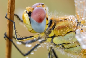 compound_eye_by_struller