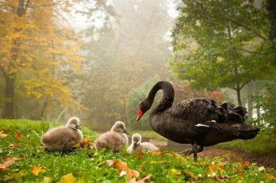 25-Most-Beautiful-Animals-Photography-StumbleUpon-11