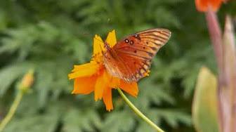 butterfly m