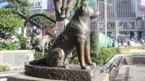Hachiko bronz