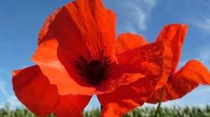 red b flower