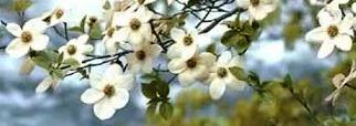 white flowers c