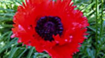 flower red nice