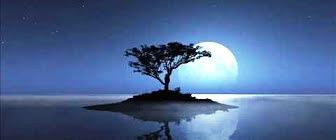 island with tree b