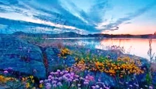 flowers-and-lake-b
