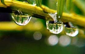 raindrops-b