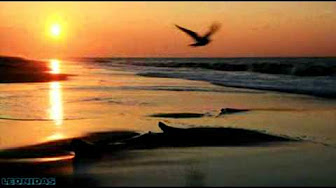 bird-and-beach