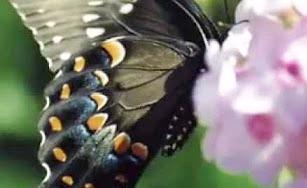 butterfly-b