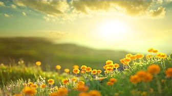 flowers-and-yellow-sun