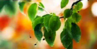 leaves-b