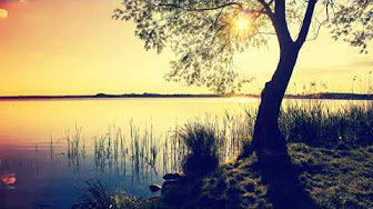 one-tree-and-lake-and-sun