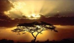 spectacular-tree-b
