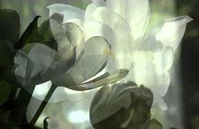 white-flower-c