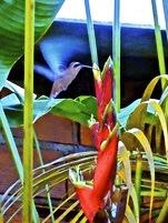 bird-brazil-b