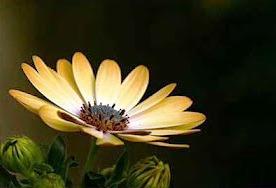 yellow-one-flower-b