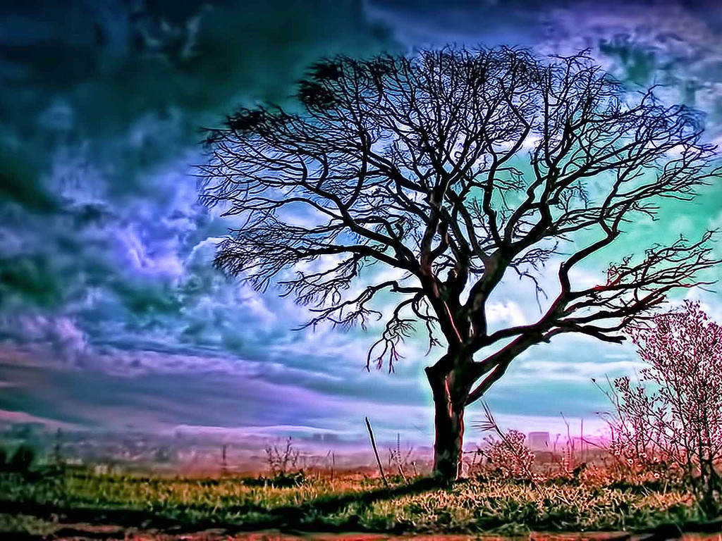 Beautiful Wallpapers for Desktop: Big Tree Wallpapers hd